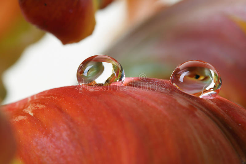 Download Water drops stock image. Image of beautiful, park, beauty - 24370823