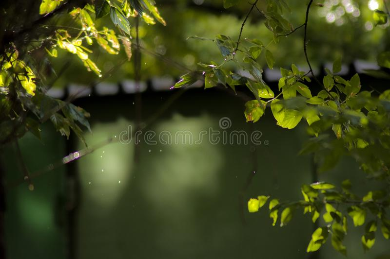Water drops, after the rain. Water drops, bokeh and the sun after the rain royalty free stock photos