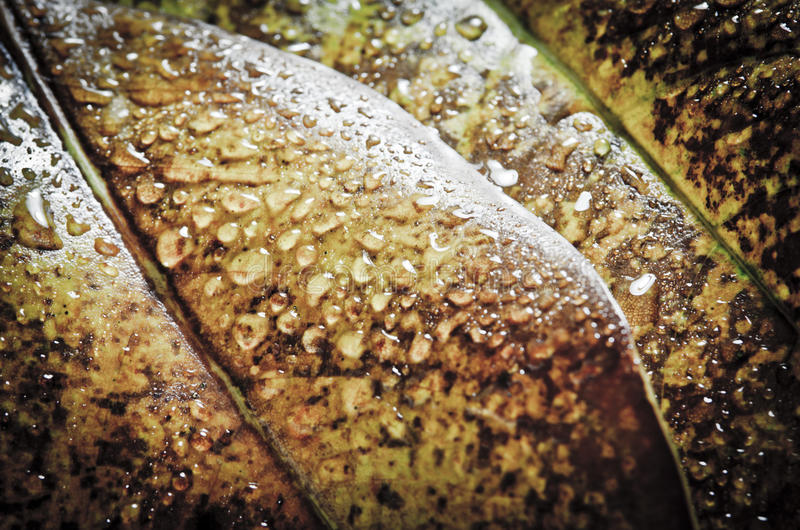 Download Water Drops Royalty Free Stock Images - Image: 33117089