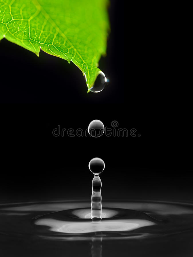 Water drops are falling down from leaf royalty free stock image