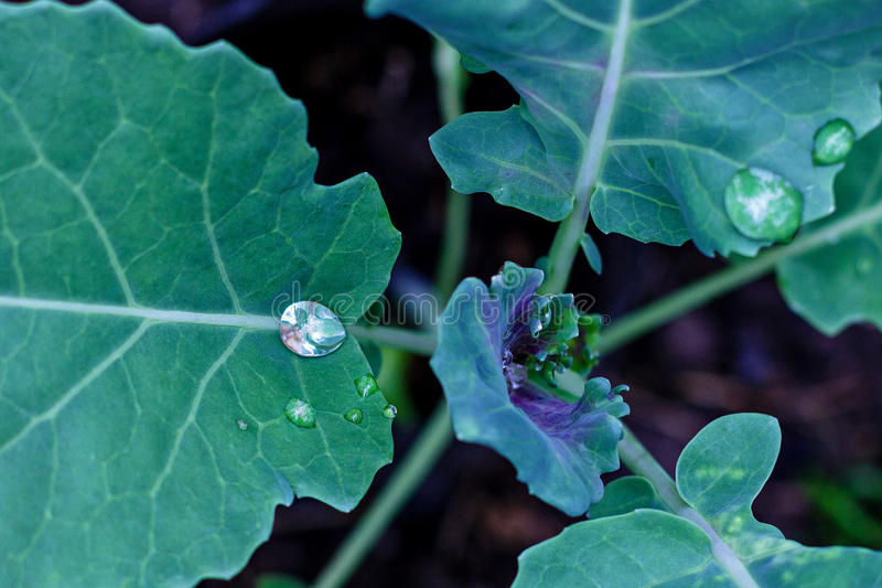 Water drops on fresh green leaves royalty free stock photos