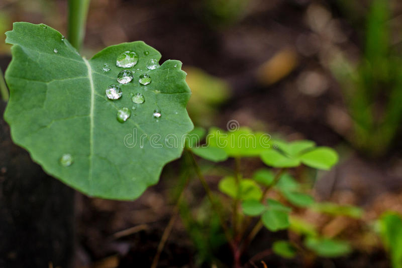Water drops on fresh green leaves stock images