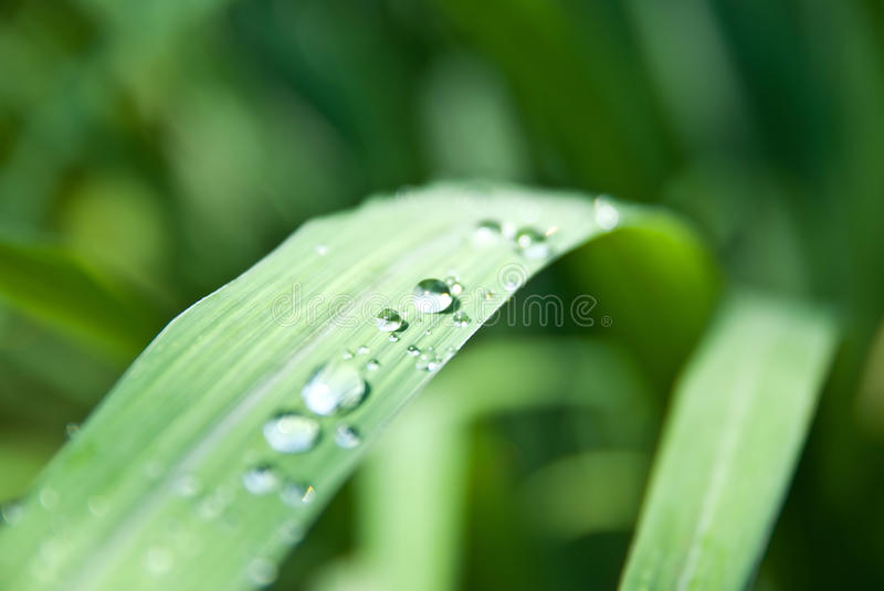 Water drops on green grass. Water drops on the green grass stock photography
