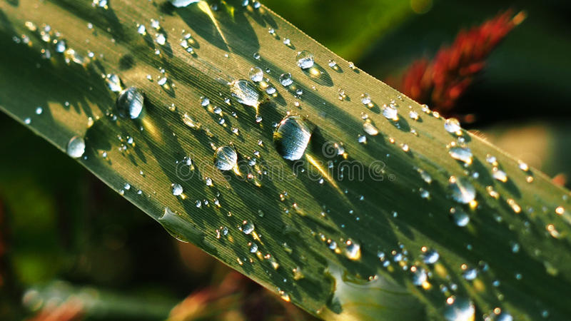 Water drops at sun light royalty free stock photography