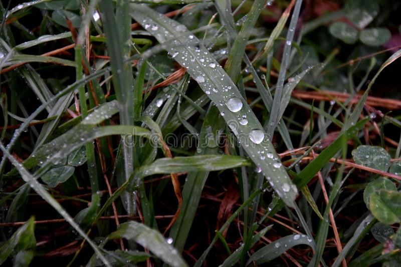 Water drops on the green grass background. royalty free stock images