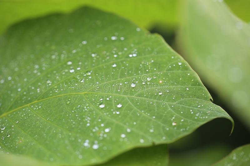 Water Drops On Green Leaf Free Public Domain Cc0 Image