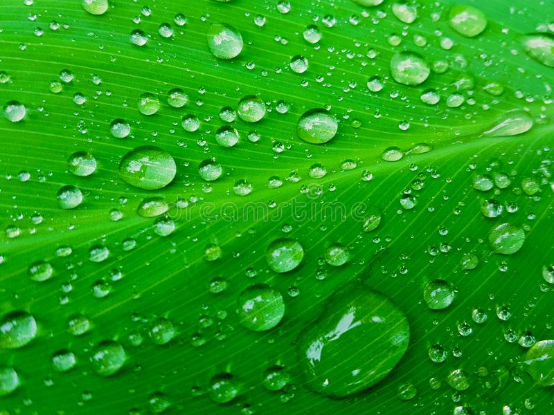 Water Drop Banner Business Background Stock Image Image