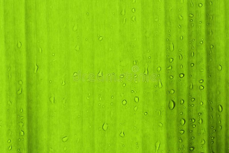 Water drops on green leaves baground. stock photos