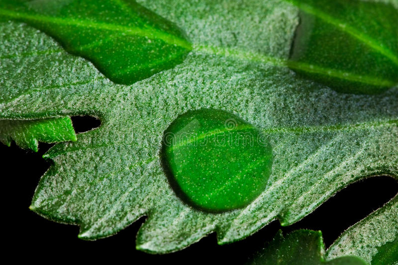 Download Water Drops on Leaf stock photo. Image of life, closeup - 10755694