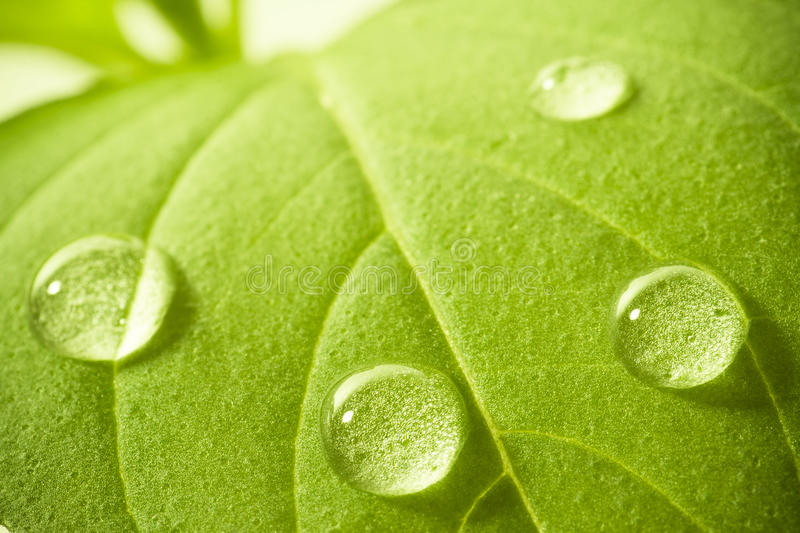 Download Water drops on leaf. stock photo. Image of leaf, drop - 14351254
