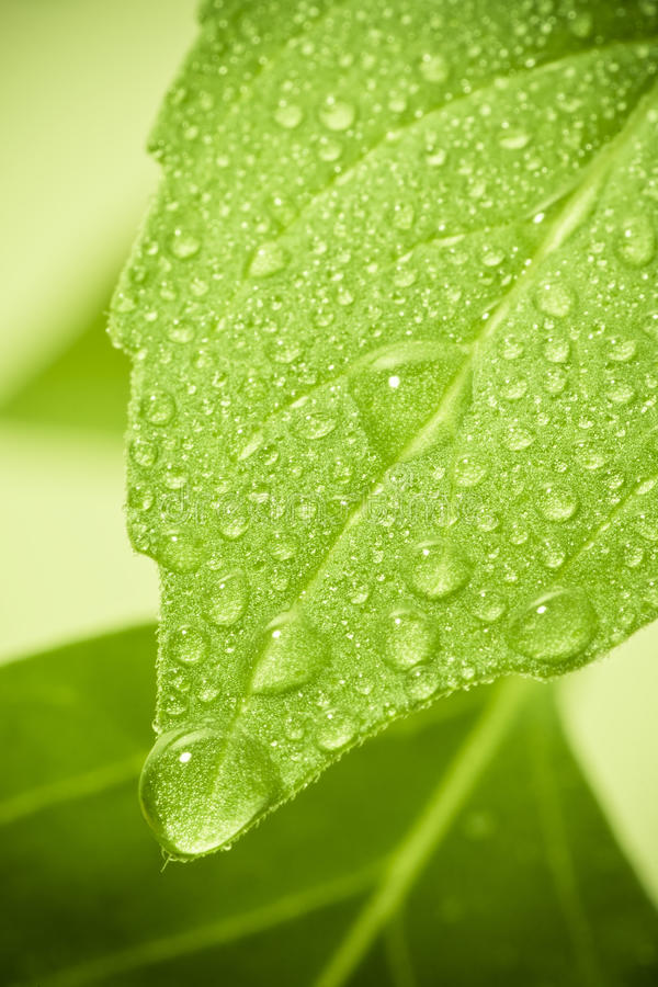 Water drops on leaf.
