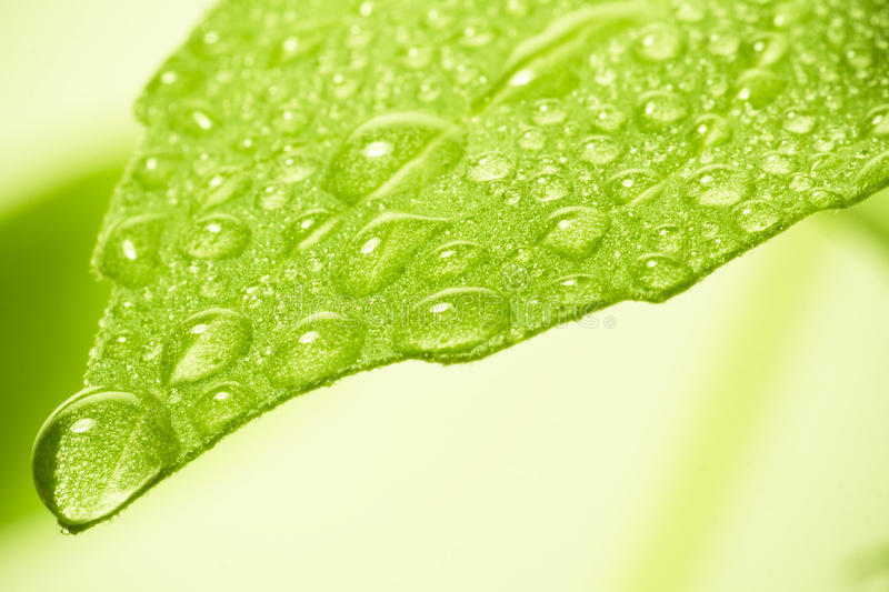 Download Water drops on leaf. stock image. Image of clear, fresh - 14351931