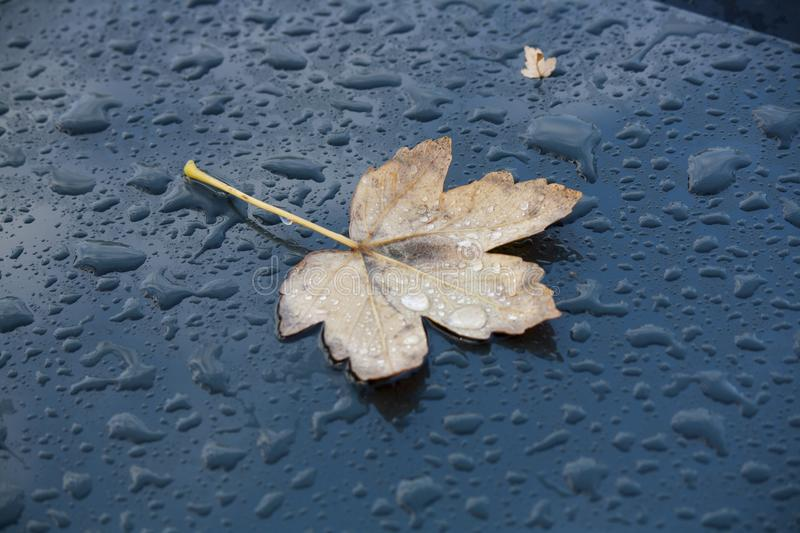 Water drops and a leaf on the roof of a car stock photo