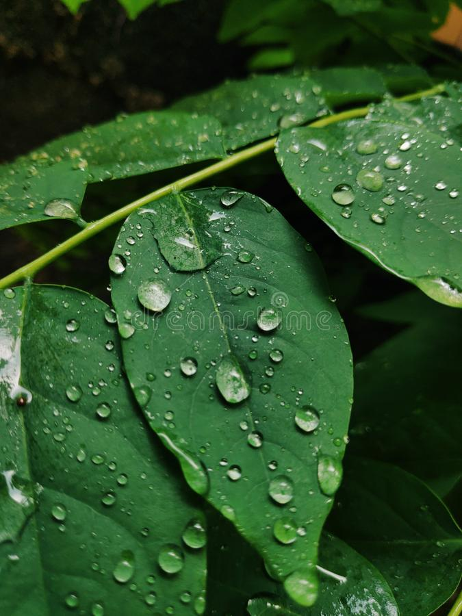 Water drops on a leaf stock images