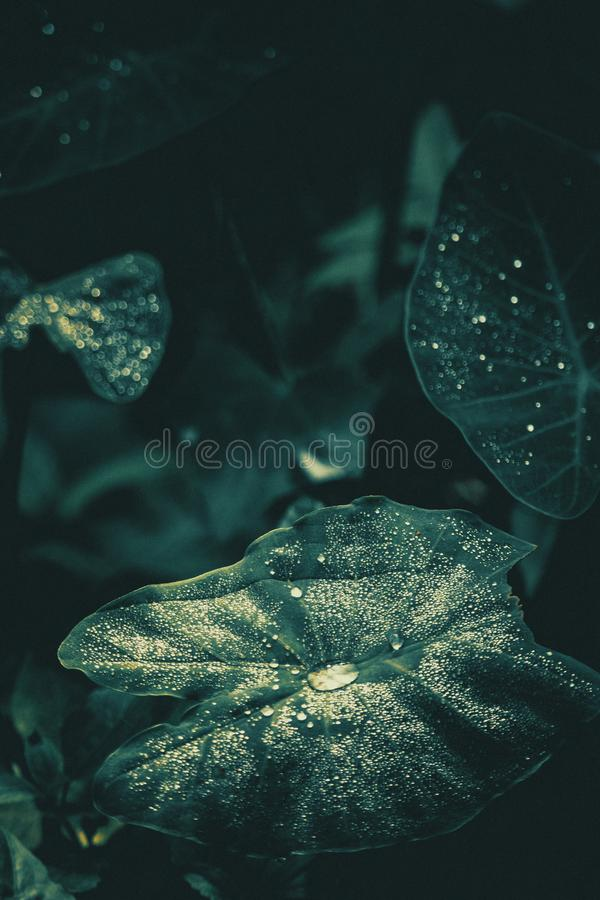 Water Drops On Leaves stock photo