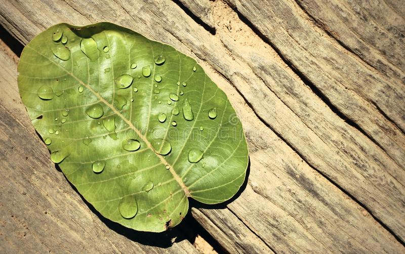 Water drops on leaves royalty free stock image