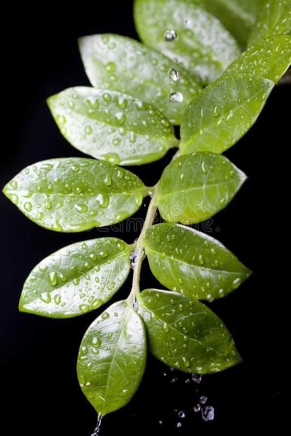 Free Water Drops On Plant Leaf Stock Photos - 9461733