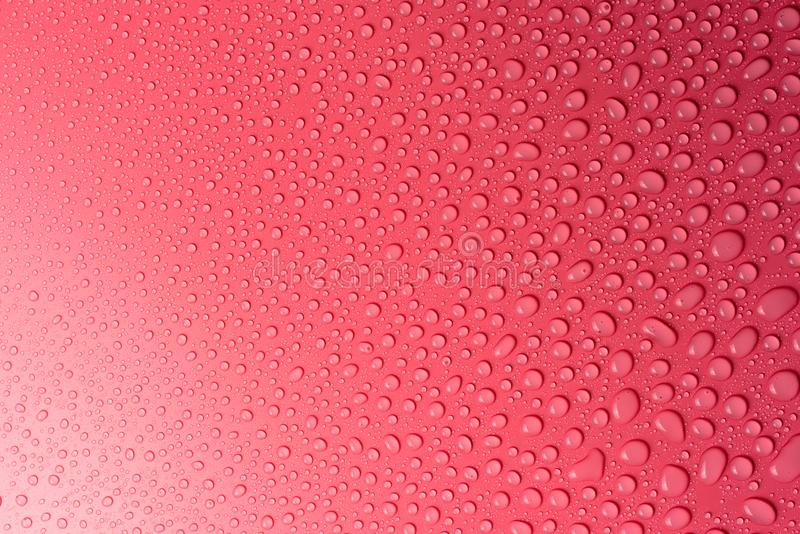 Water drops on a pink, matte background illuminated with a delicate light. Water drops on a pink, matte background illuminated with a delicate light royalty free stock photography