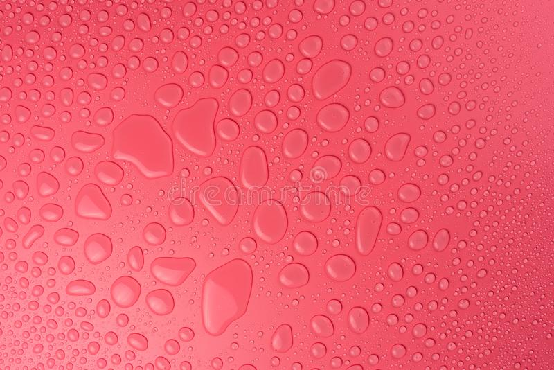 Water drops on a pink, matte background illuminated with a delicate light. Water drops on a pink, matte background illuminated with a delicate light stock photography