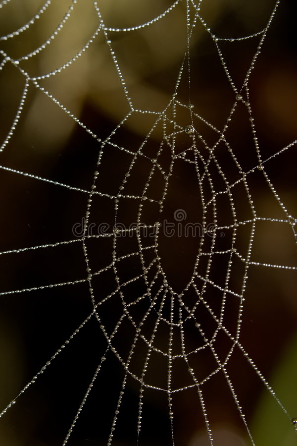 Water drops on spider net royalty free stock image