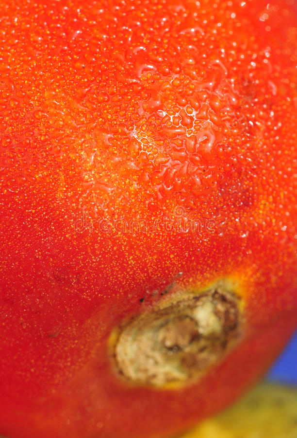 Download Water drops on tomato stock image. Image of health, meal - 11804801
