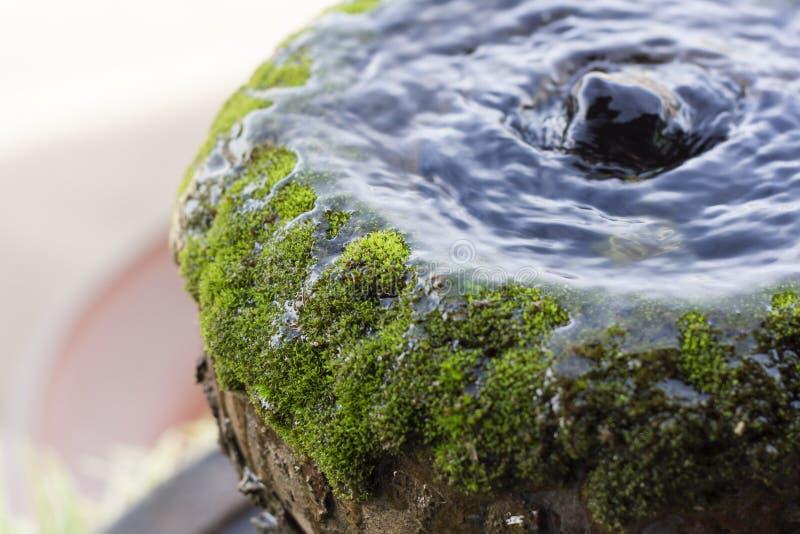 Water en groen mos stock fotografie