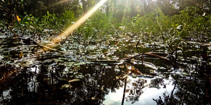 Water en installaties die aan zonlicht in het bos wordt blootgesteld stock foto's