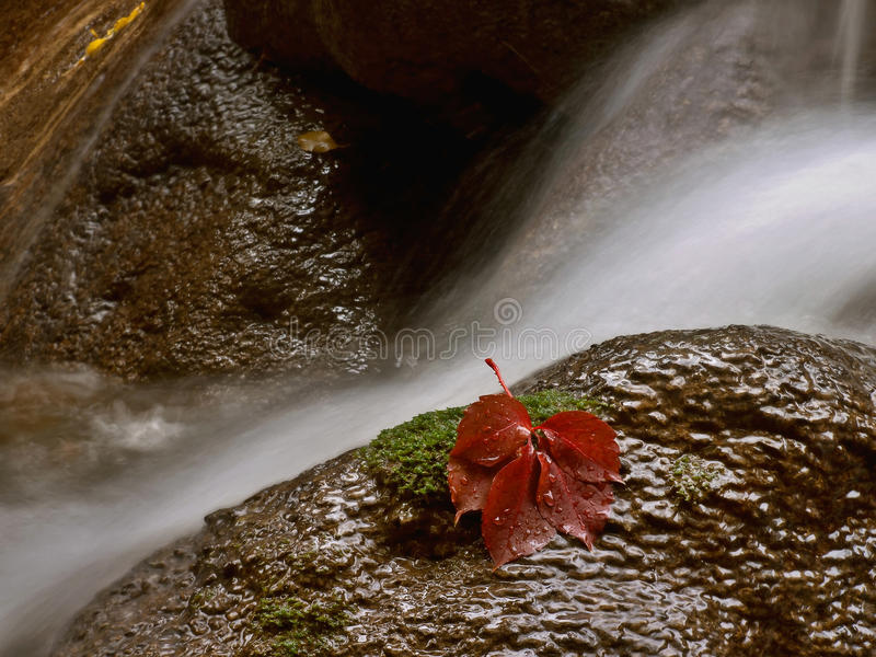 Water en rood blad royalty-vrije stock foto's