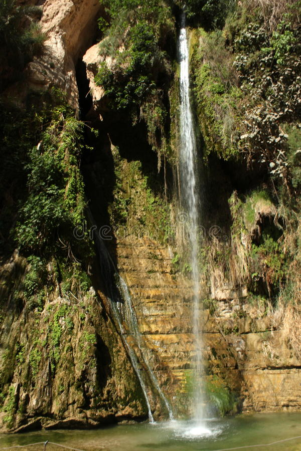 Free Water Fall At Ein Gedi Israel Royalty Free Stock Images - 24794179