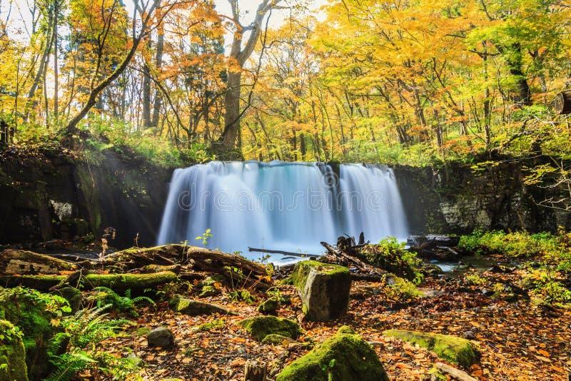 Water fall of Oirase Stream in autumn at Towada Hachimantai National Park in Aomori, ,Tohoku, Japan royalty free stock images