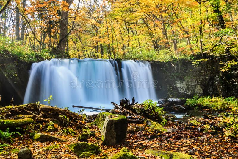 Water fall of Oirase Stream in autumn at Towada Hachimantai National Park in Aomori, ,Tohoku, Japan royalty free stock photos