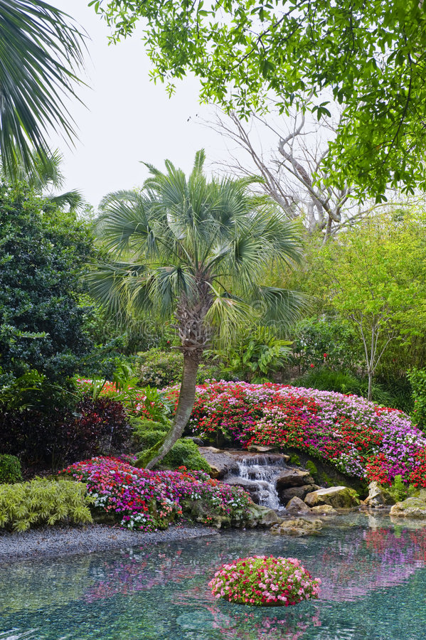 Download Water feature in pond stock image. Image of tropics, foliage - 5010721