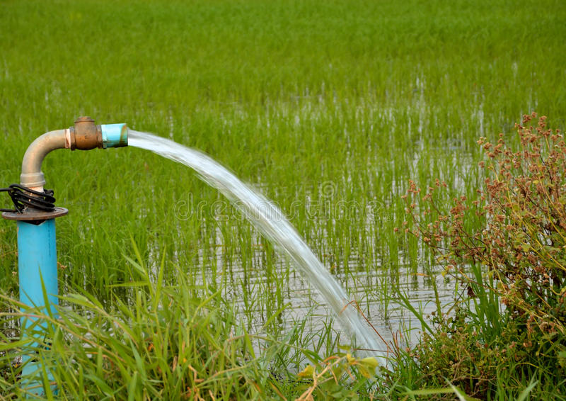 Water for fields rice. Photo evening sunset in the open field, pumping out a farmer Thailand Guard arid no rain. Farmers Thailand dehydration Find alternate stock image