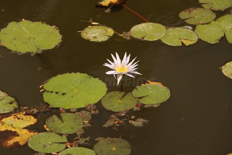 Water, Flora, Flower, Yellow stock photos