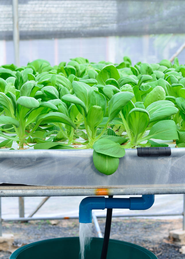 Water flow of hydroponic. Plantation stock photography