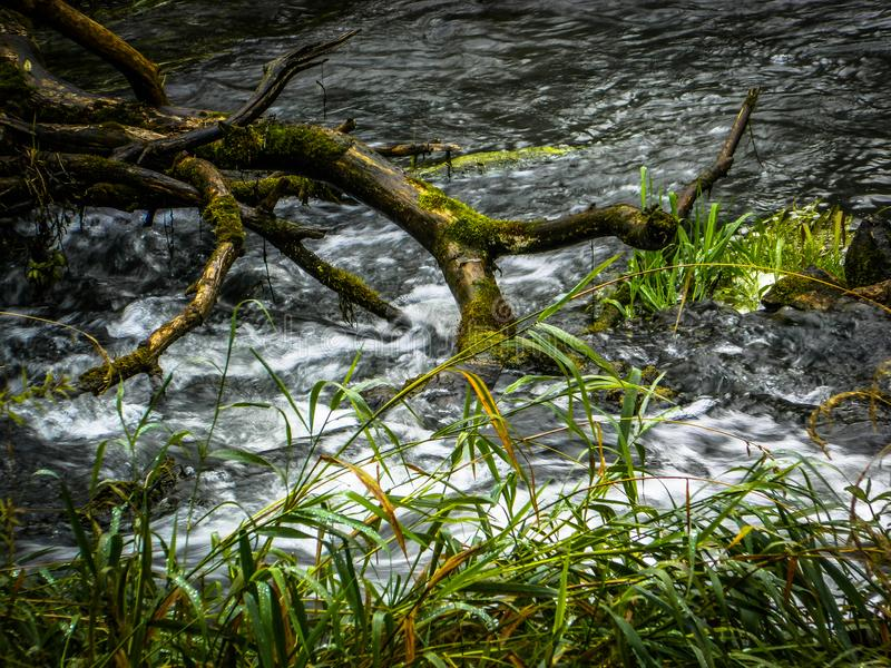 The water flow of the river. Fast flowing rivers are picturesque, and the abundance of vegetation on the banks. The water flow in the shots looks very stock photo