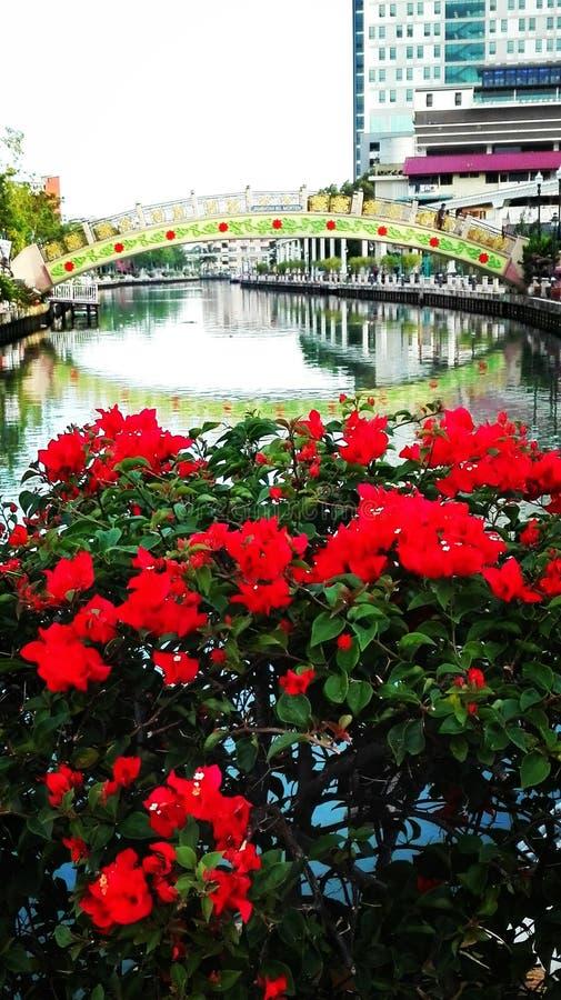 Water&Flowers royalty-vrije stock foto