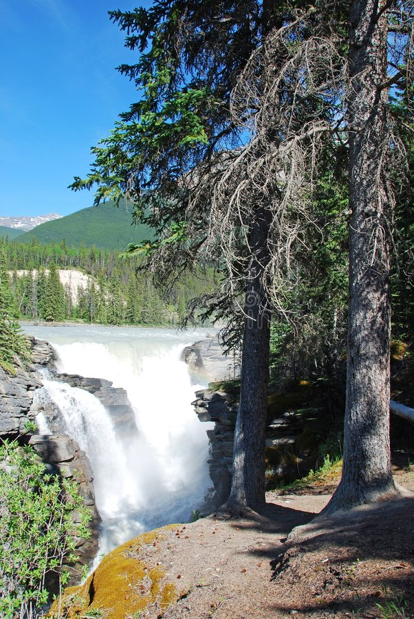 Water flowing from Athabasca Falls royalty free stock images