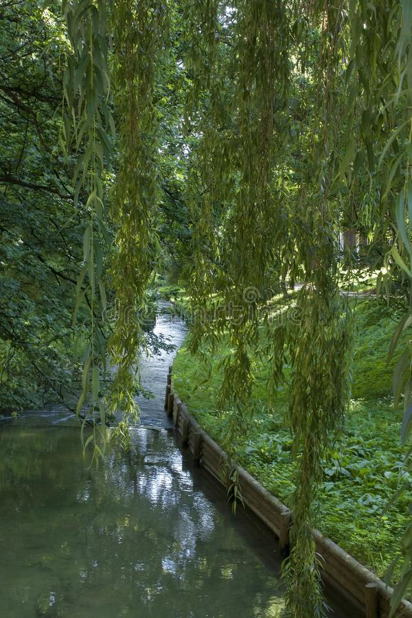 Water channel flowing under green leafs in spring royalty free stock photos