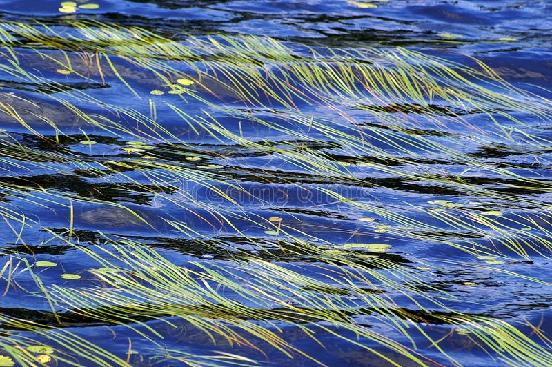 Water flowing over grass. Water flowing over underwater grass in a lake stock photo