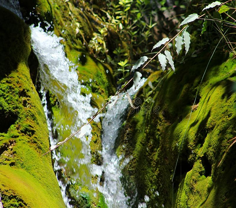 Water Flowing Surrounded With Plants royalty free stock image