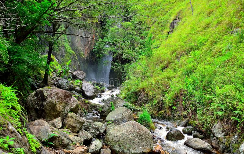 Water flows between mossy rocks stock photo