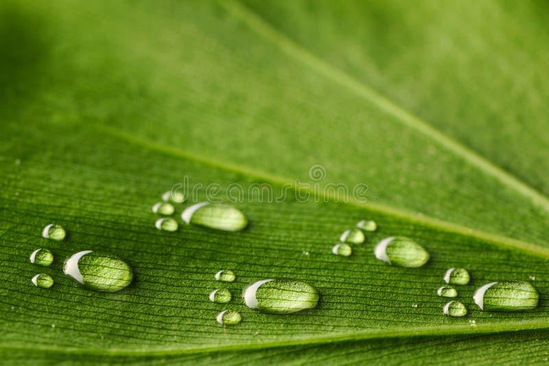 Water footprints on leaf. Beautiful water footprint drops on a leaf close-up