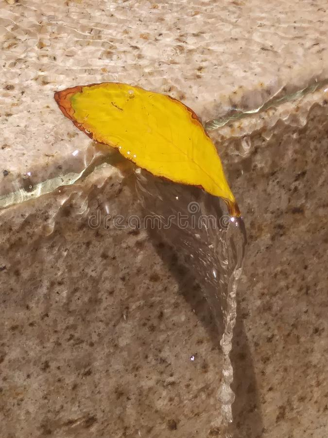 water fountain leaf, leaf in fountain, just hanging on, step with leaf, small yellow leaf, Tony yellow leaf in water fountain royalty free stock images