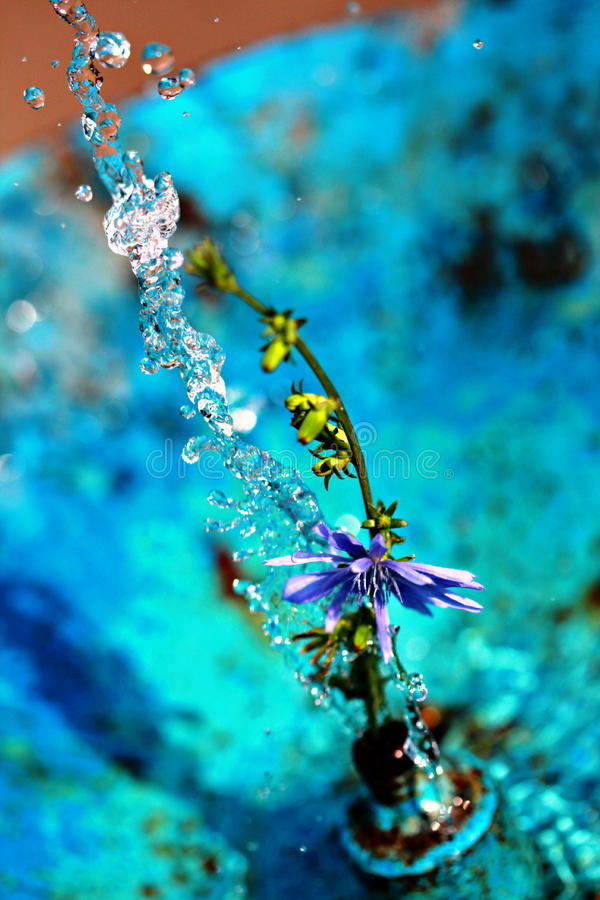 Water Fountain with Purple Flower. A water fountain shoots up water over a beautiful purple flower in Ukraine royalty free stock image