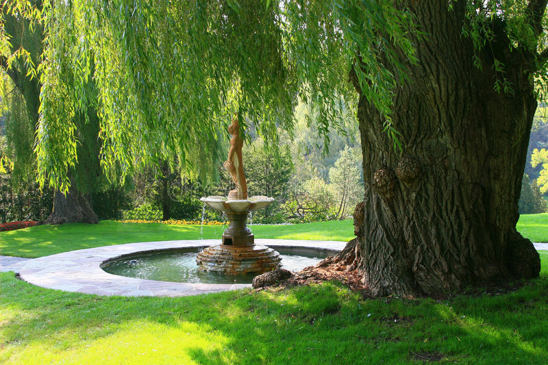 A water fountain signifies serenity under a willow tree in Toronto's Edward's Gardens. Tranquility under a Majestic Willow Tree royalty free stock photo