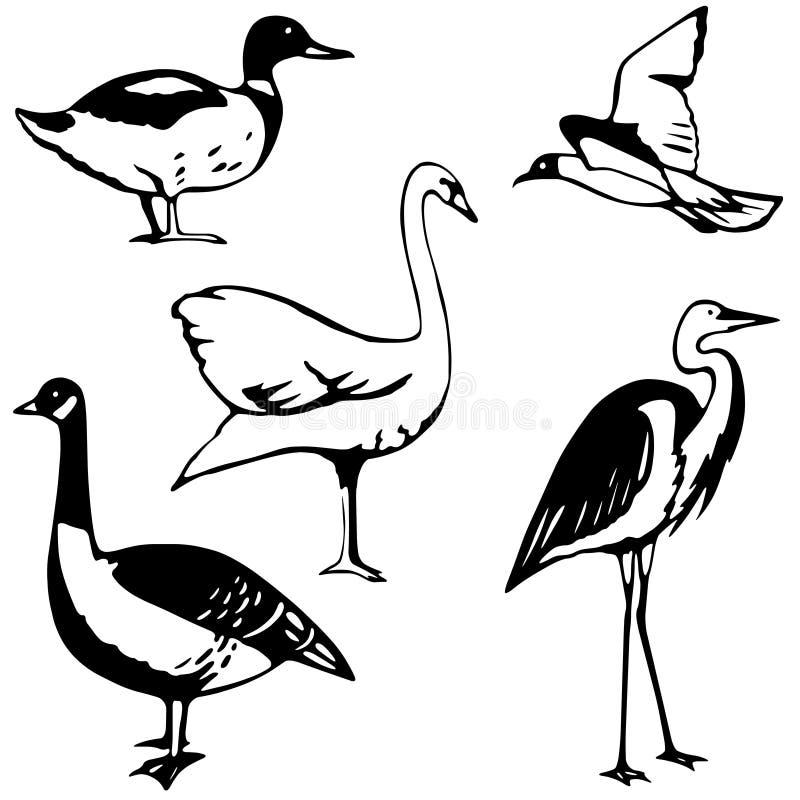 Free Water Fowl Stock Photo - 4101330