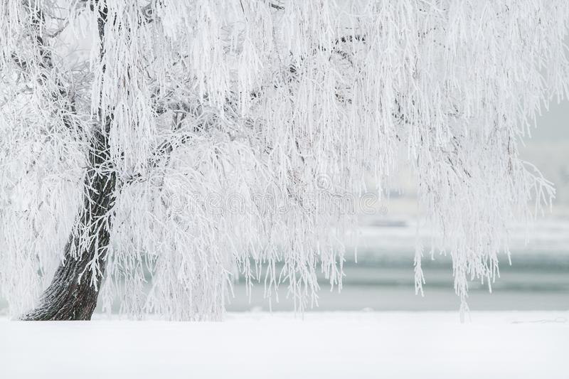 Water, Freezing, Winter, Tree royalty free stock image