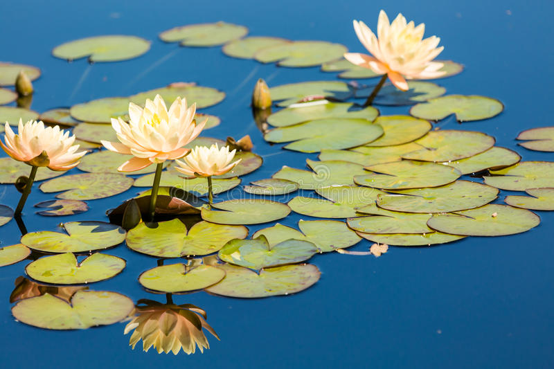 Water garden royalty free stock images