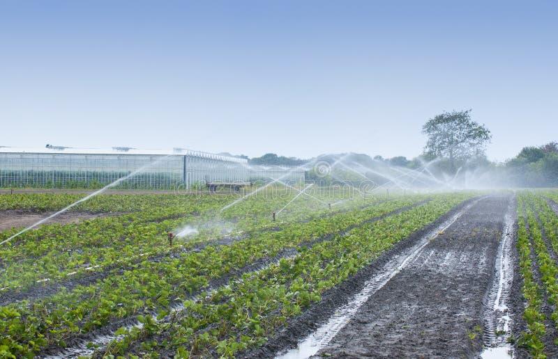 Water gevende gewassen royalty-vrije stock afbeelding